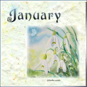 botanicals-january-72-stroke