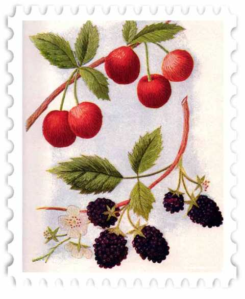 juno-Berries-Stamp