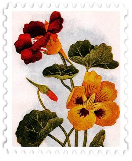 juno-Nasturtiums-Stamp