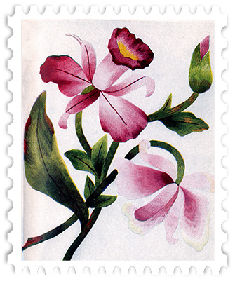 juno Orchid Stamp