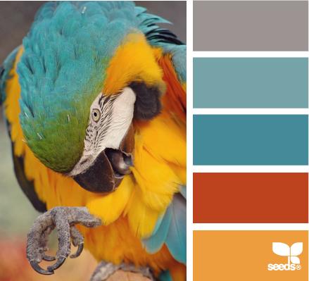 Inspiration design seeds Macaw Hues