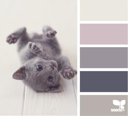 _Inspiration Design Seeds Kitten Tones