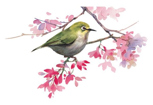 juno-Rubescent-Bird
