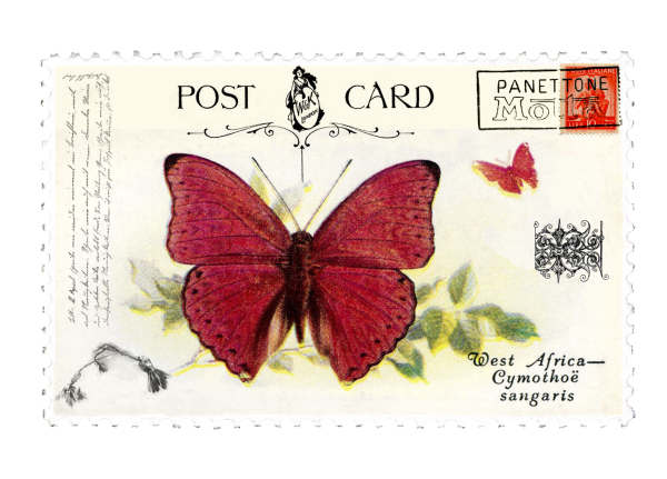 juno Vintage Butterfly Postage Stamp 5