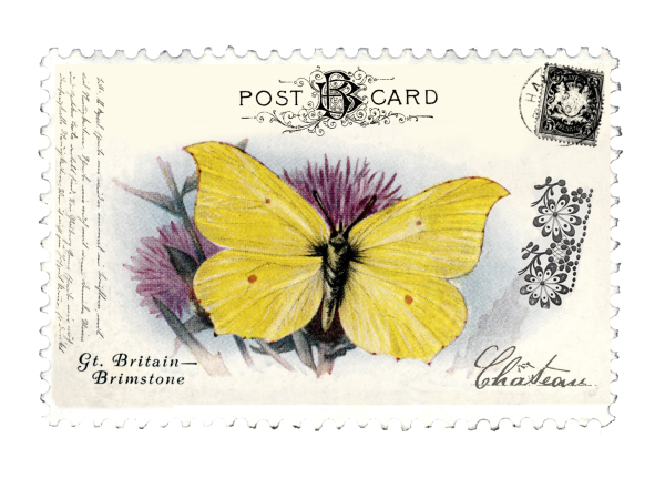 juno Vintage Butterfly Postage Stamp 7