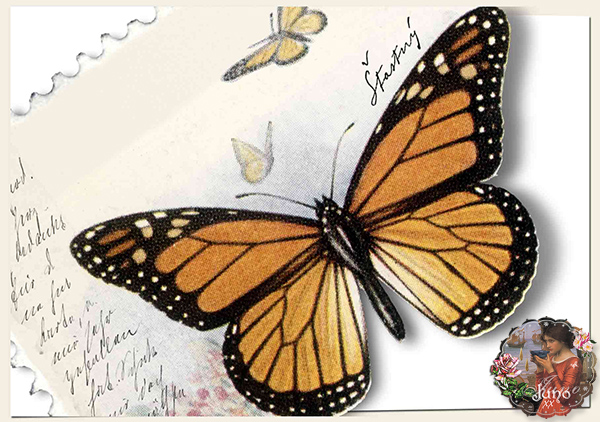 _juno Butterfly Border Card