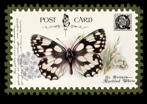 juno Vintage Butterfly Postage Stamp 10 Mat