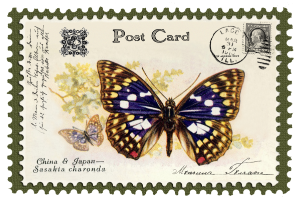 juno Vintage Butterfly Postage Stamp 8 Mat
