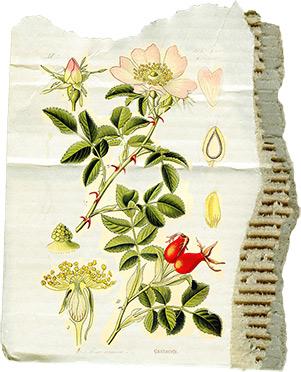 juno-Apricot-Nectar-Floral-Cardboard